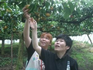 梨狩りだよ~♪